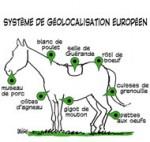 Viande de cheval : les conclusions de l'enquête connues jeudi