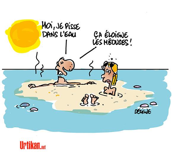 Nouvelle invasion de méduses sur la Côte d'Azur - Dessin de Deligne
