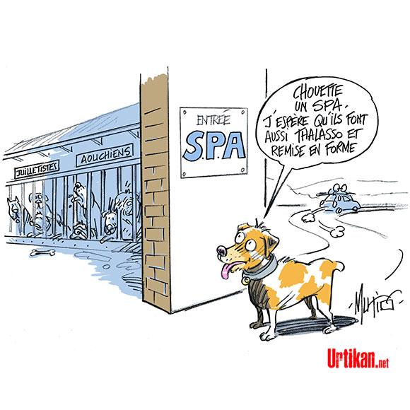 Été critique à la SPA : moins d'adoption, plus de locataires - Dessin de Mutio
