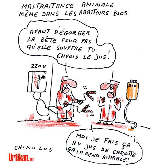 Actes de cruauté dans un abattoir du Gard certifié bio - Dessin de Chimulus