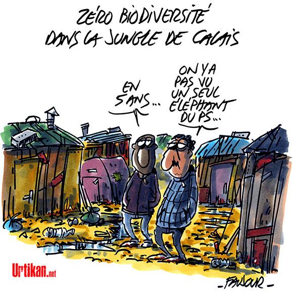 Jungle de Calais : François Hollande annonce le démantèlement - Dessin de Faujour