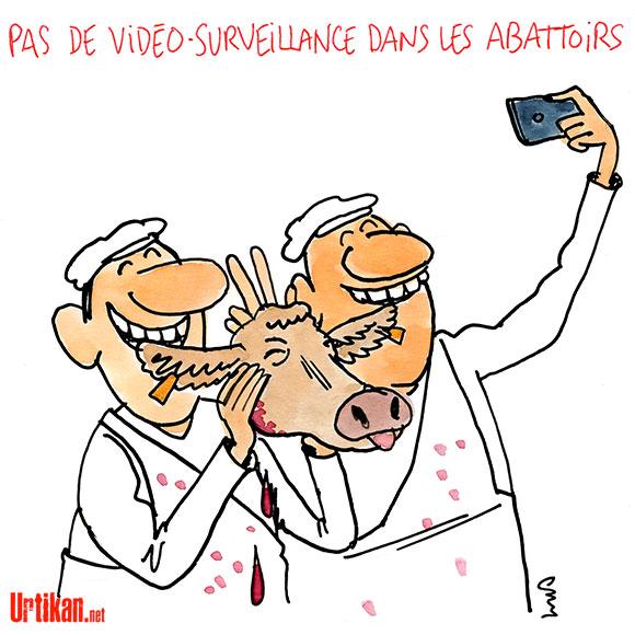 Abattoirs : les députés s'opposent à la vidéosurveillance - Dessin de Cambon